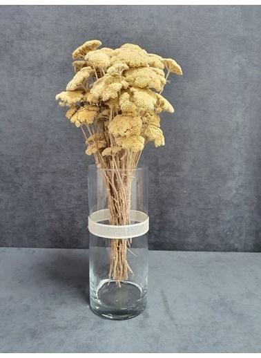 Kuru Çiçek Deposu Kuru Çiçek Şemsiye Otu Demeti 45 Cm Bordo Kahve